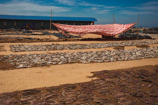dry fish market on beach in negombo sri lanka