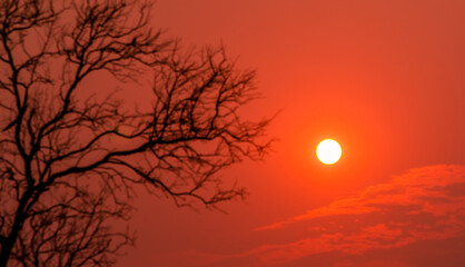 Round small sun on red sunset sky with blur foreground silhouette leafless tree. Peaceful, tranquil, and death abstract background. Beautiful branches pattern. Nature landscape. Summer sky at dusk.