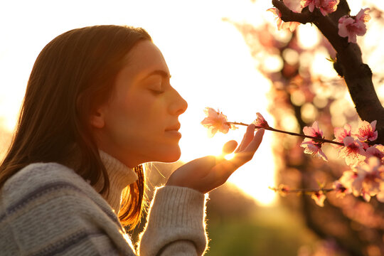 Woman smelling flower from a peach tree at sunset