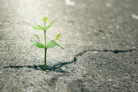 New Life concept with seedling growing sprout (tree).business development symbolic. weed growing through a crack in the pavement