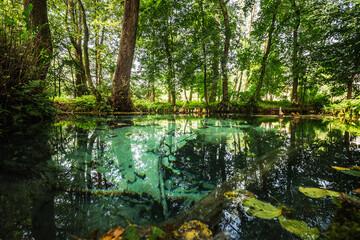 Źródła w Dłubniańskim Parku Krajobrazowym