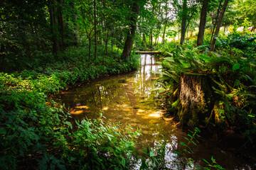 Fototapeta Źródła w Dłubniańskim Parku Krajobrazowym obraz