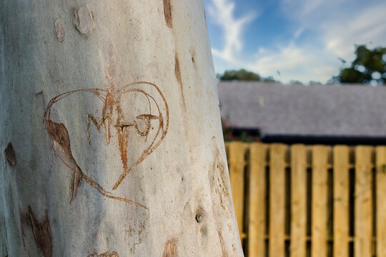 Lover's Initials Carved Into a Tree