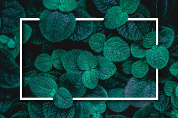 Wall Mural - Full Frame of Green Leaves with white frame Texture Background. tropical leaf