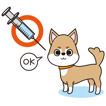 狂犬病の予防注射をした犬