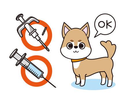 マイクロチップと狂犬病の予防注射をした犬