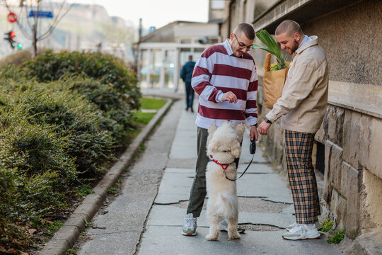 Gay couple walking home after grocery shopping with dog
