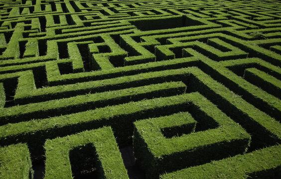 Green bushes maze