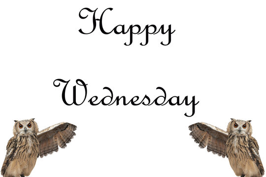 """Design of """" Happy Wednesday """" with owls presentation."""