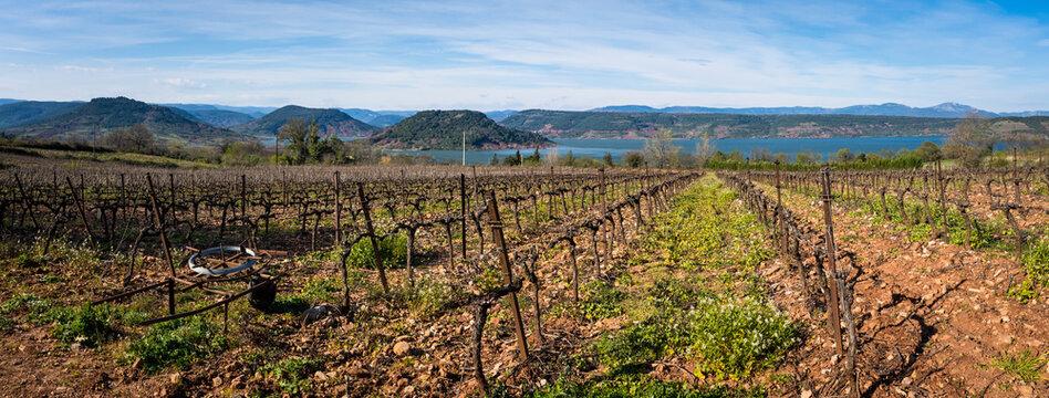 Vue panoramique sur des vignes avec un paysage de lac et de montagne en arrière plan