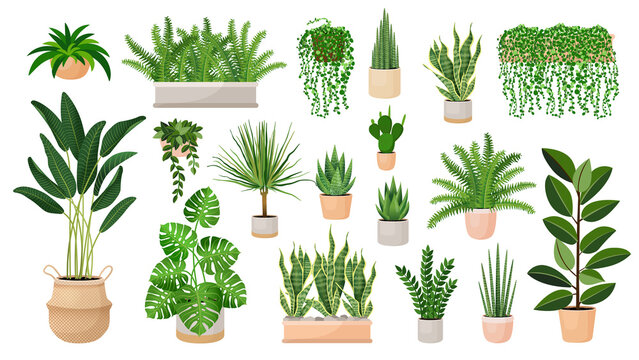 Set of houseplants in a pots for home, office, premises decor. Colorful vector collection of illustrations isolated on white background. Trendy home decor with plants, urban jungle.