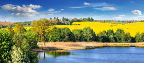 Fototapeta kwitnienie rzepaku na Mazurach w północno-wschodniej Polsce obraz