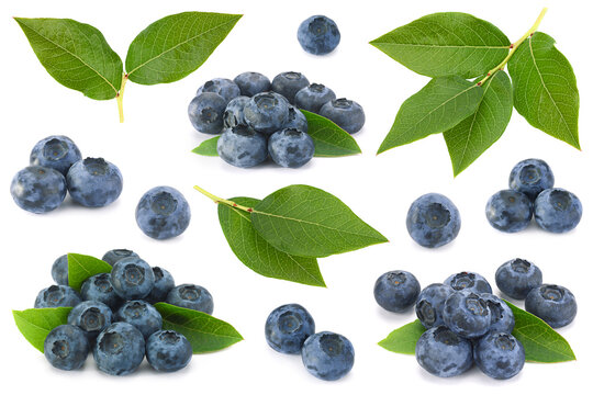 Blueberry collection on white background