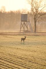 Printed kitchen splashbacks Antelope ganz schön mutig