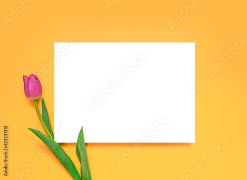 Pink tulip on a yellow background, layout for design. Postcard. Mother's Day, Valentine's Day, Birthday celebration concept. Spring mockup. Layout with white card. Flat lay, top view.