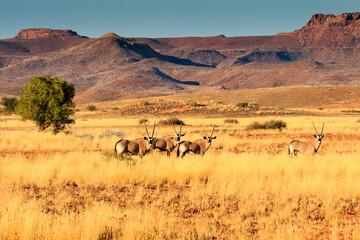 Printed kitchen splashbacks Antelope Oryx Antilope