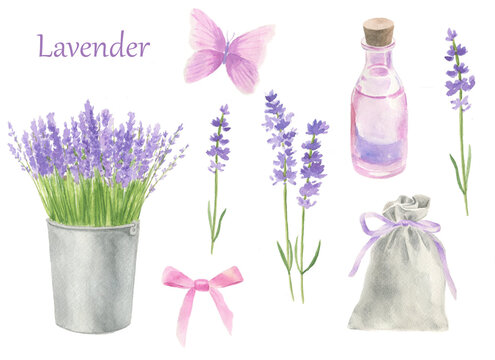 Set of watercolor elements: lavender, oil, bag, bow, butterfly, bucket with lavender.