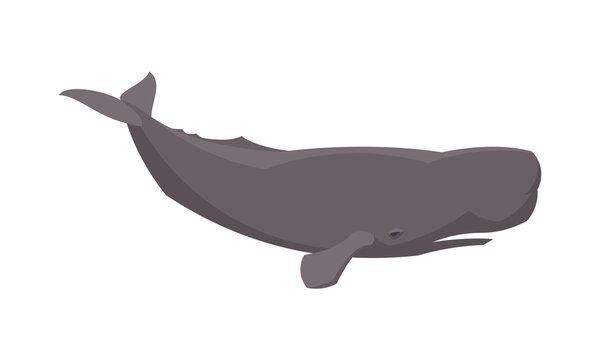 Flat sperm whale. Vector illustration