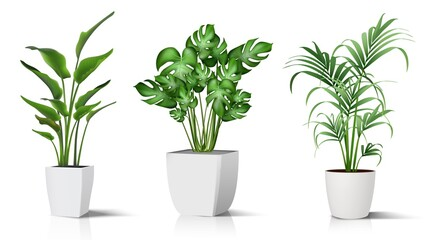 Fototapeta Collection of 3d realistic vector icon illustration potted plants for the interior. Isolated on white background. obraz
