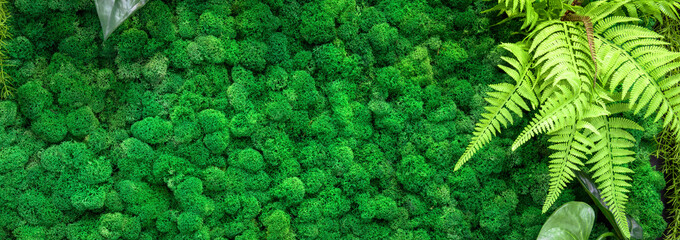 Moss texture background, panoramic banner with green vertical garden