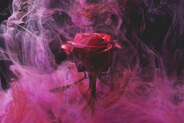 Samotna róża w dymie