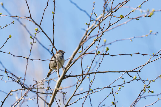 A little bird on a tree branch in early spring