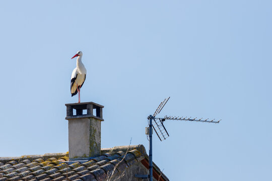 A white stork on the chimney of a house