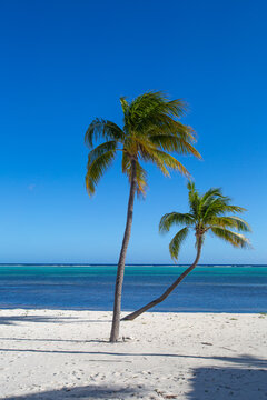 Tropical white sand beach with coco palms and the turquoise sea on Caribbean island.  Little Cayman, Cayman Islands