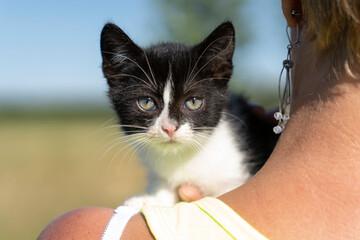 Kociak siedzący na kobiecym ramieniu