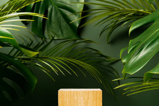 Cosmetics product advertising stand. Exhibition wooden podium on green background with palm leaves and shadows. Empty pedestal to display product packaging. Mockup