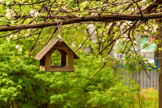 bird house bird feeder hanging on a blossoming apple tree