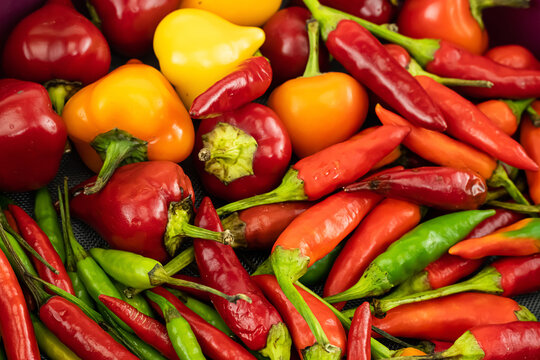 assorted chili peppers red, green and yellow vegetable background cooking