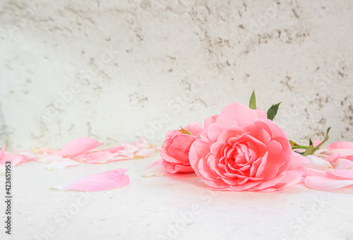 Pink roses and petals on white background. Perfect for background greeting cards and invitations of the wedding, birthday, Valentine's Day, Mother's Day.