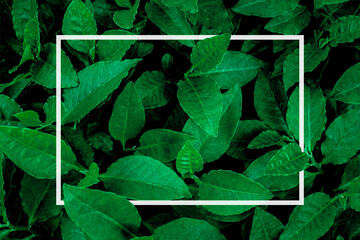 Wall Mural - creative layout, green leaves Background with white square frame, flat lay