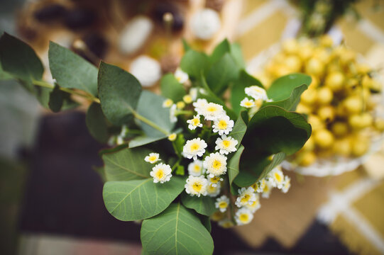 white flowers with yellow center