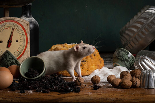 Cute white and brown rat sitting in a stil life scene themed baking cake green background