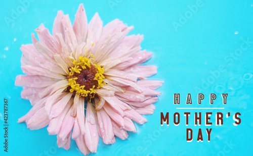 Mother's day poster banner with wet zinnia flower on blue background for holiday gift.