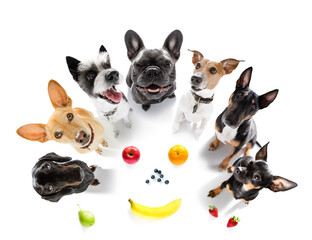couple of dogs  around healthy fruits