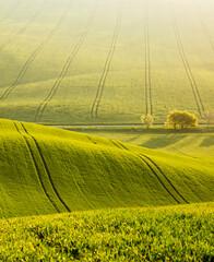Wall Mural - Majestic rural landscape in sunny day. Beautiful sunlight on the wavy fields.