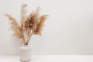 Obraz Pampas grass in a vase near white wall. - fototapety do salonu