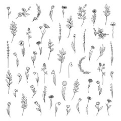 Fototapeta Flowers and plants collection. Hand drawn botanical collection with flowers and leaves. Set of floral elements