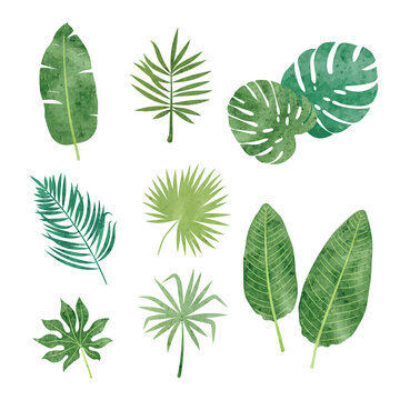 Tropic leaves set. Vector watercolor illustration of tropical plants.