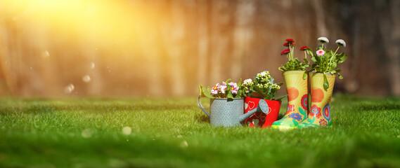 Obraz flower arrangements in the garden against the backdrop of summer, sunny garden - fototapety do salonu