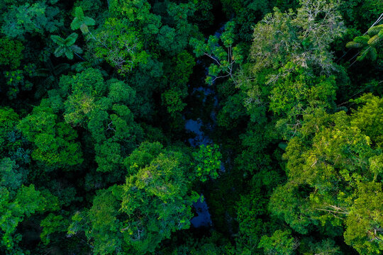 Aerial top view of a small stream inside a tropical forest, with detailed view of the leaves from the different tree species found in the rainforest