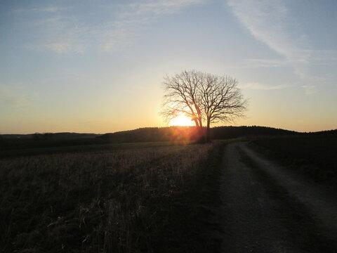 Sonnenaufgang am Waldrand hinter einem Baum - Wanderweg, am Morgen, Sunrise