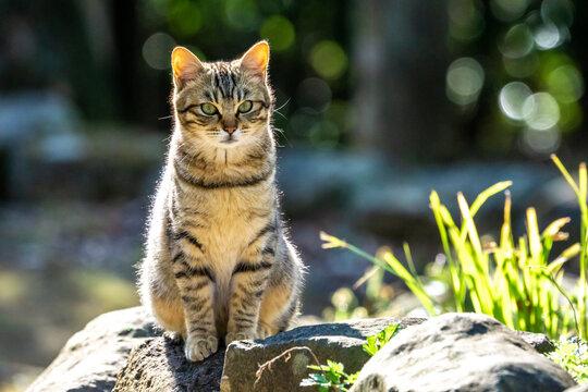野良猫のポートレート
