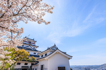 桜と唐津城 佐賀県唐津市 Cherry Blossoms and Karatsu castle Saga-ken Karatsu city