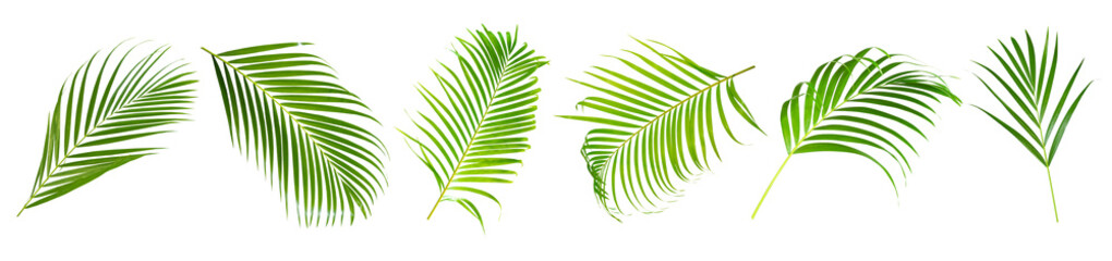 Beautiful green palm leaf isolated on white background with for design elements, tropical leaf, summer background,clipping path - fototapety na wymiar