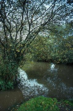 Etang, Sologne, région Centre Val de Loire, Loiret, 45,
