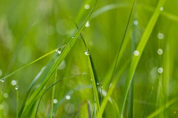 Łąka o poranku, pajęczyna i świt w rezerwacie przyrody, odblaski i refleksy światła słonecznego - fototapety na wymiar
